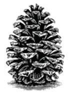 Southland Log Homes Logo